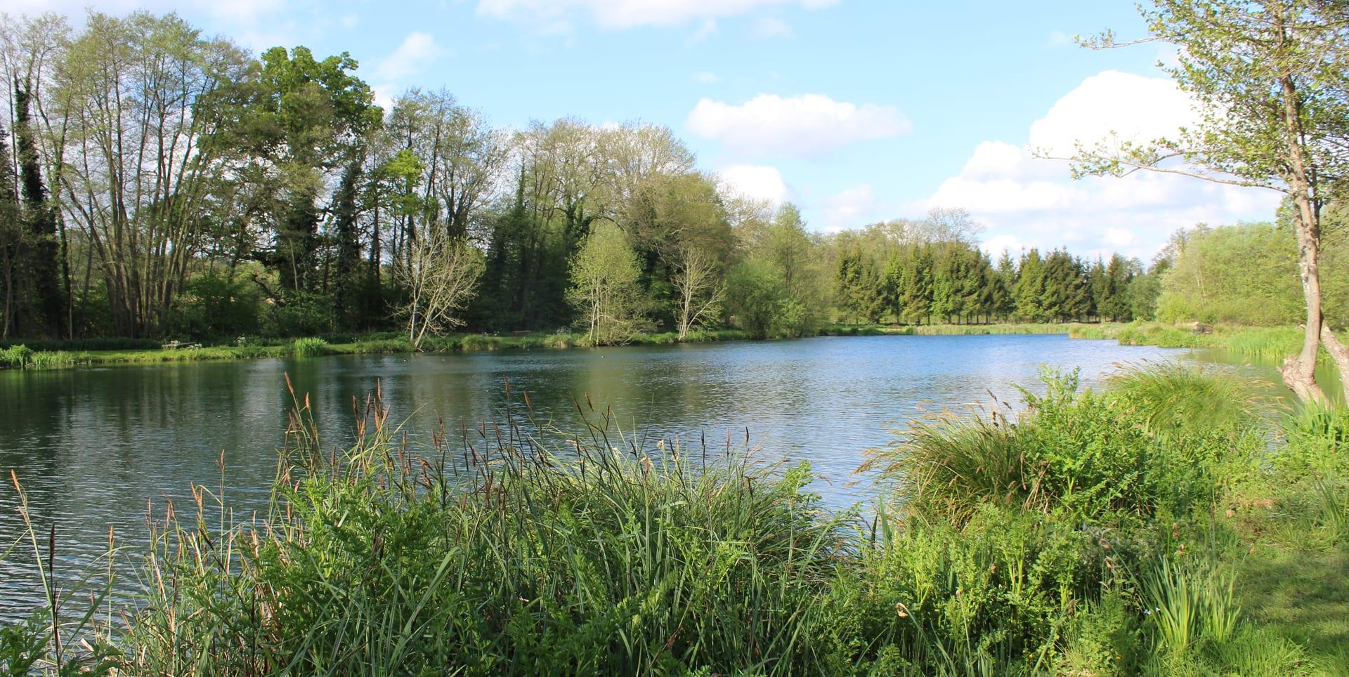 barn-elms-roxy-lake